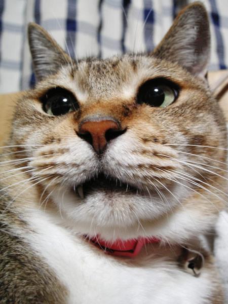 猫顔写真.jpg